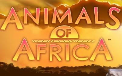 Animals of Africa Online Pokie