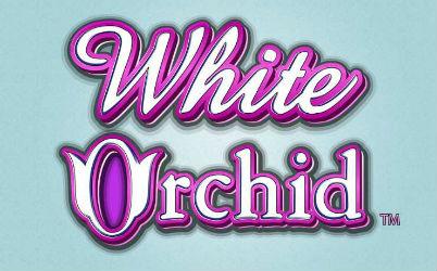 White Orchid Online Slot